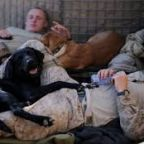 War Dogs: Would You Send Your Dog to Fight Our Battles?