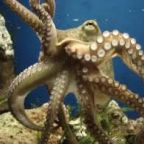Cephalopods: The Fascinating Lives of Sensitive Beings