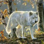 On Killing Wolves: Should Only Trained Ethicists Weigh In?